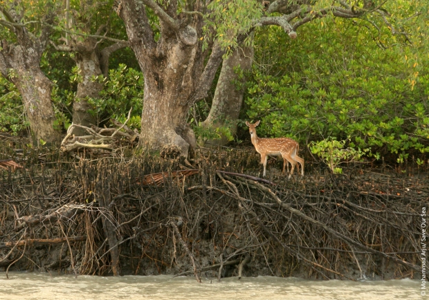 Sundarban West Wildlife Sanctuary
