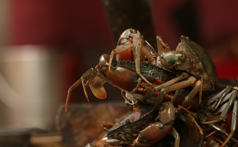Flying crabs: Notes on Bangladesh's export oriented mud crabfishery