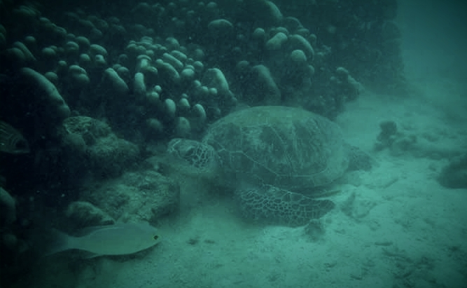 IMCC5 Focus Group: Overcoming ethical challenges in marine conservationcommunication